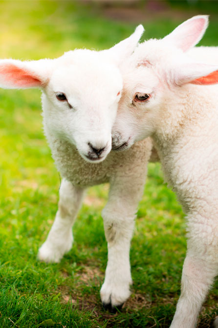 bienestar-animal