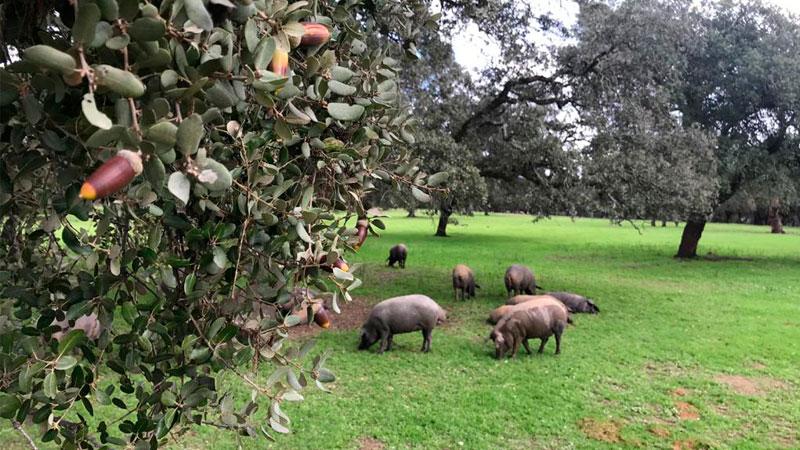 carrusel-cerdo-iberico-3